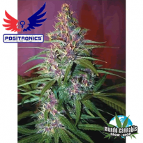 Positronics Purple Haze #1
