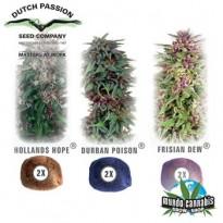 Dutch Passion Colour Mix 2