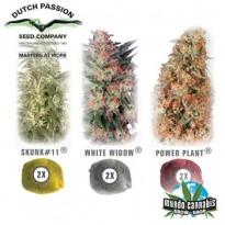 Dutch Passion Colour Mix 3