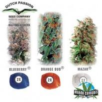 Dutch Passion Colour Mix 4