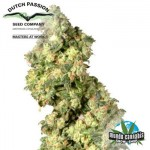 Dutch Passion Ultra Skunk