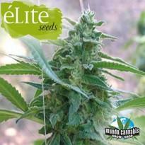 …lite Seeds La Rica