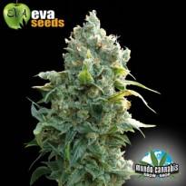 Eva Seeds African Free