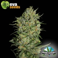 Eva Seeds Monster