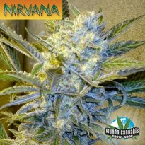 Nirvana Blue Mystic
