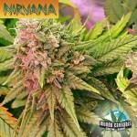 Nirvana Bubbelicious