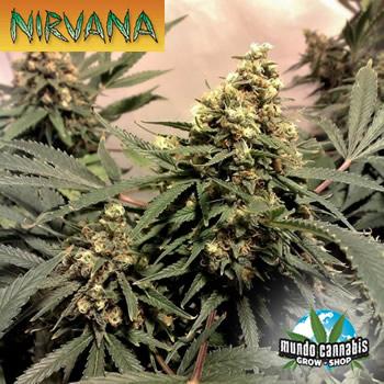 Nirvana Pure Power Plant