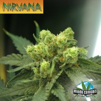 Nirvana Wonder Woman