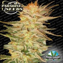 Paradise Seeds Ice Cream