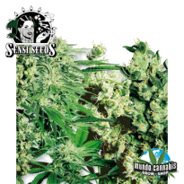Sensi Seeds Femenized Mix Sensi