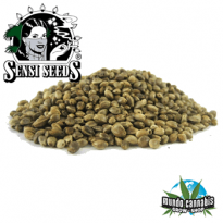 Sensi Seeds Big Bud Sensi