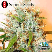 Serious Seeds Kali Mist