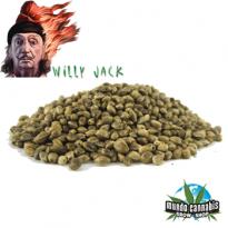 Willy Jack Aftershock