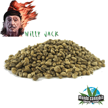 Willy Jack